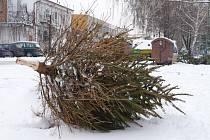 Břeclavský vánoční stromeček