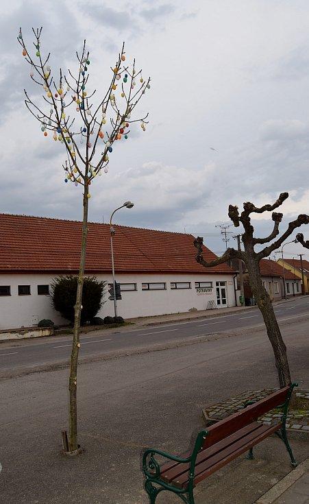 Skořápkovník v centru Dolních Věstonic.