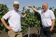 Přístroj Chytrá vinice měří ve vinohradu teplotu, srážky i vlkhost. Získaná data pomáhají vinařům při ošetřování hroznů. Třeba Radku Osičkovi (vlevo).
