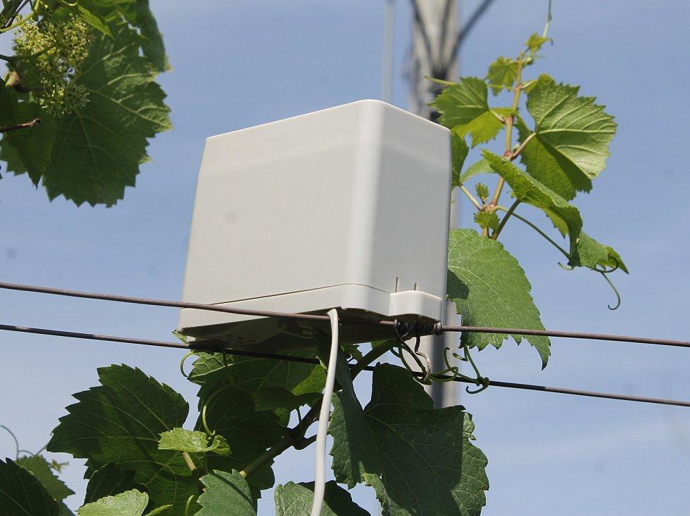 Přístroj Chytrá vinice měří ve vinohradu teplotu, srážky i vlkhost. Získaná data pomáhají vinařům při ošetřování hroznů.