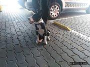 Odchycení psi z Břeclavi.