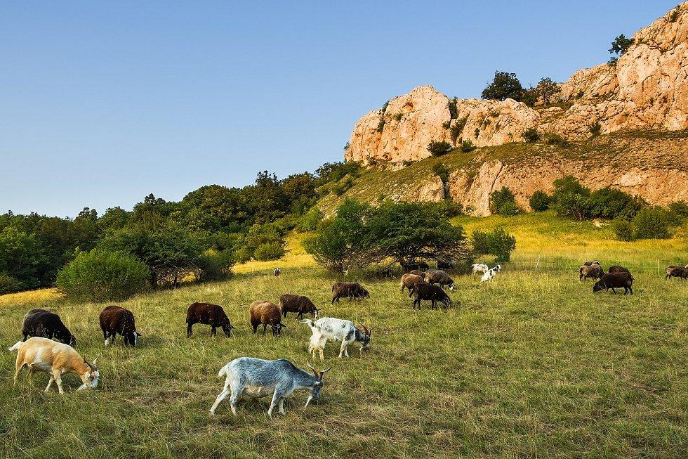 Ovce v Soutěsce.