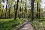 Z výletu k soutoku Dyje s Moravou. věrečný úsek cesty vede po dřevěném chodníčku. Jste tu jen 148 metrů nad mořem.