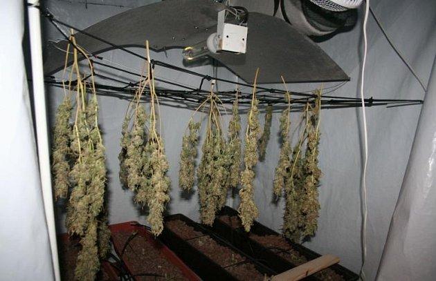 Při domovní prohlídce vjednom bytovém domě na Břeclavsku objevili kriminalisté pěstírnu konopí. Zajistili celkem osm set gramů sušené marihuany.
