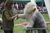 Ve Valticích se předvede na osm desítek chlupatých psích krasavců.