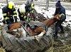 Koni z pneumatiky pomohli až hasiči