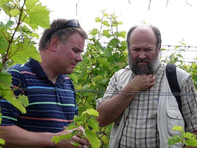 Vinař František Mádl ukázal účastníkům lednické bioakademie ekologicky šetrnější pěstování hroznů přímo ve své biovinici.