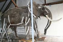 Preparát slona v Šakvicích.