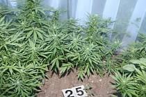 Policisté v úterý zajistili 350 rostlin konopí v Brodu nad Dyjí. Na zahradě a ve fóliovnících je pěstoval zatím neznámý podnájemník.