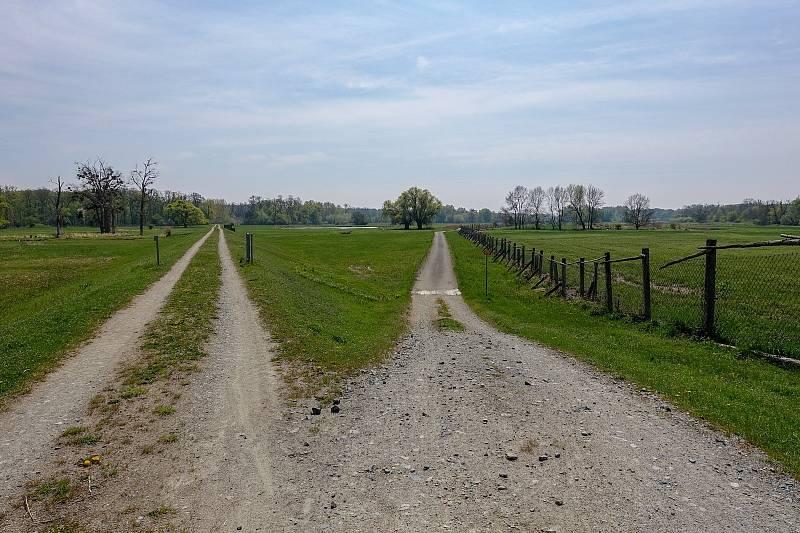 Z výletu k soutoku Dyje s Moravou.