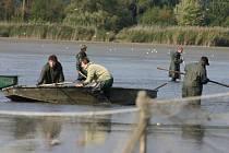 Ve čtvrtek dopoledne lze z břehu lednického rybníku Apollo pozorovat práci rybářů, kteří z vody loví metráky kaprů, plevelných karasů a další druhy ryb. Bývalý správce Otto Vaďura označil výlov za katastrofální.