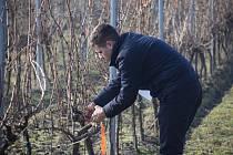 Žáci z Valtic soutěžili se svými rakouskými vrstevníky v řezu révy.