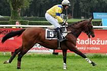 Tříletý hnědý hřebec Salient of Gracie, vlastní odchovanec dostihové stáje BORS Břeclav obdržel od handicapera známku 74 kg a je v současnosti nejlépe hodnoceným tříletým překážkovým koněm v České Republice.