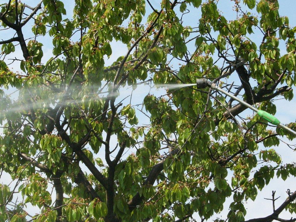 Soukromá firma ze Svatobořic – Mistřína stříká stromy a keře na Hustopečsku proti housenkám bekyně zlatořitné.