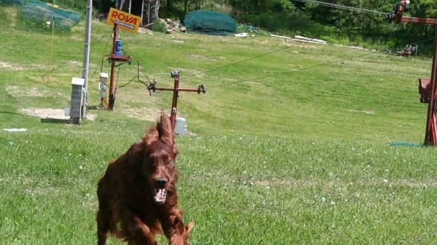 Na lyžařské sjezdovce v Němčičkách závodila v sobotu dopoledne asi padesátka psů nejrůznějších plemen.