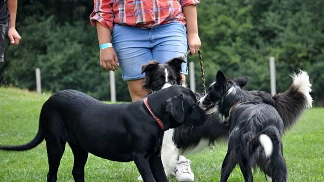 V Černohorském psím ráji bylo v sobotu veselo. Na Setkání přátel a kamarádů čtyř tlapek a vlhkých čumáků si pořadatelé připravili celodenní program pro páníčky a jejich psy, plný her a soutěží.