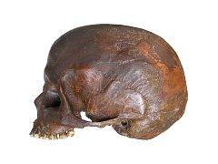 Brněnští vědci pracují na jedinečném projektu. Vytváří bustu tisíce let staré šamanky na základě kostry z Dolních Věstonic.