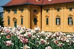 Tulipány v lednickém zámeckém parku. Jaro 2020.