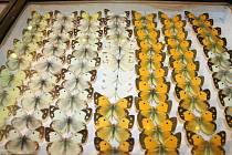 Evropští i exotičtí motýli a brouci přilákali v sobotu do kulturního domu Delta Břeclav stovky návštěvníků.
