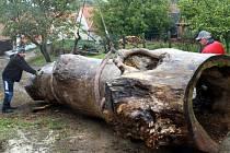 Téměř osm metrů dlouhý kmen topolu docestoval v tomto týdnu z Orlických hor na zahradu starovické mateřské školy. Obří dutý kmen bude dominantou školní zahrady, která právě prochází obnovou.