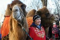 Děti v tříkrálových korunkách a za nimi dva velbloudi a dav lidí. Tříkrálový průvod prošel v pondělí centrem Břeclavi. Koledníkům pak u Koruny požehnal břeclavský děkan Josef Ondráček.
