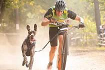 Zdeněk Straka z Břeclavi se svým psem Montym skončil na mistrovství světa v polském Lubieszowě na třetím místě. Úspěch dosáhl v kategorii koloběžky tažené psem.