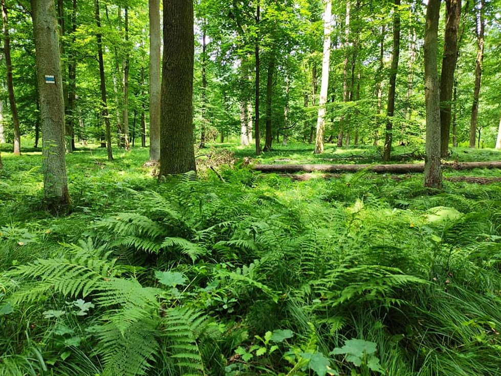 Z výletu do Nových Zámků v Litovelském Pomoraví. Lužní les má své půvaby.