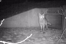 Propustek pod silnicí u Nových Mlýnů využívají vydry i další zvířata.