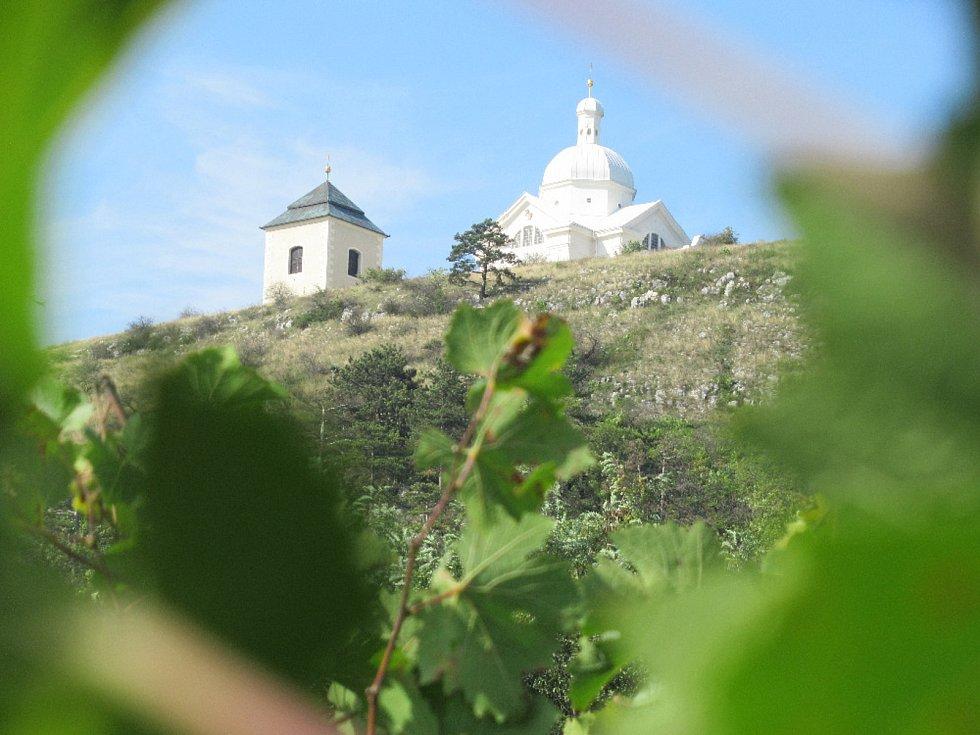 Svatý kopeček z vinic. Foto:  Petr Pelikán