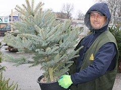 Prodejce před břeclavským hypermarketem Lidl začal prodávat vánoční stromky už v pátek.