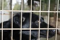 Útulky pro opuštěná zvířata u obce Bulhary.