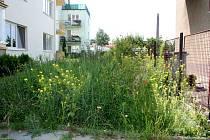 Na vzrostlý plevel rostoucí v těsné blízkosti jeho plotu upozorňuje Břeclavan Miroslav Lepta. Tvrdí, že se problém snaží opakovaně řešit už několik let. Téměř bezvýsledně. Úředníci slíbili, že pokud se skutečně stala chyba, nechají ji napravit.