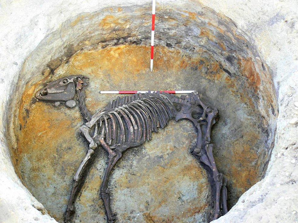 Tzv. sídlištní jáma s kostrou koně na germánském sídlišti v Pasohlávkách.