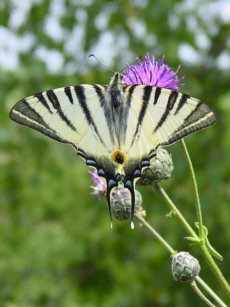 Nejvyšší zDunajovických kopců Velká Slunečná připomíná díky umělým terasám stupňovitou pyramidu dávných Mayů. Vzniku stepi vokolí pomohla pastva koz a ovcí. Žijí tam vzácné druhy hmyzu, například motýl otakárek ovocný.