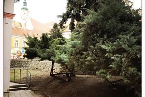 Do péči o zeleň investuje Mikulov šest milionů korun.