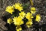 Okolí Hustopečí rozkvetlo do barevného jara.