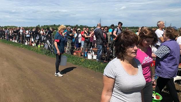 Stovky sběračů jahod v sobotu zavítaly do Šakvic.