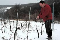 Vinař Stanislav Novák z Bořetic se bojí o úrodu.