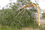 Náhlá bouřka doprovázená deštěm a kroupami řádila v Horních Věstonicích. A ničila. Do břízy ve sportovně-kulturním areálu udeřil blesk.