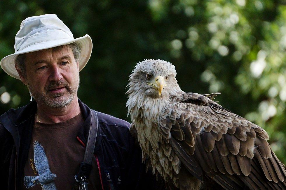 Orel mořský je největším dravcem vyskytujícím se v ČR a zároveň je největším evropským orlem. Společnost Zayferus vznikla před 30 lety.