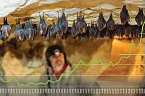 Počet zimujících vrápenců malých se v posledních deseti letech Na Turoldu zvyšuje.