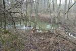 U Moravského Krumlova škodí v lese bobři.
