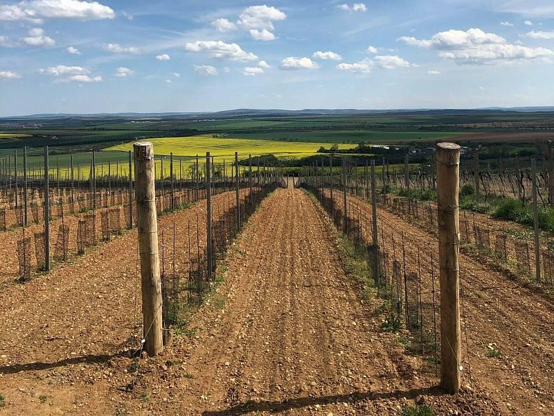 Trať Kravák Runu vede malebným prostředím vinic.