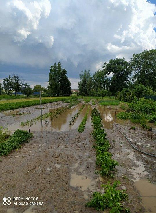 Kroupy jako golfové míčky. Úrodu v obci Rybníky na Znojemsku poničila v pátek k večeru bouřka.