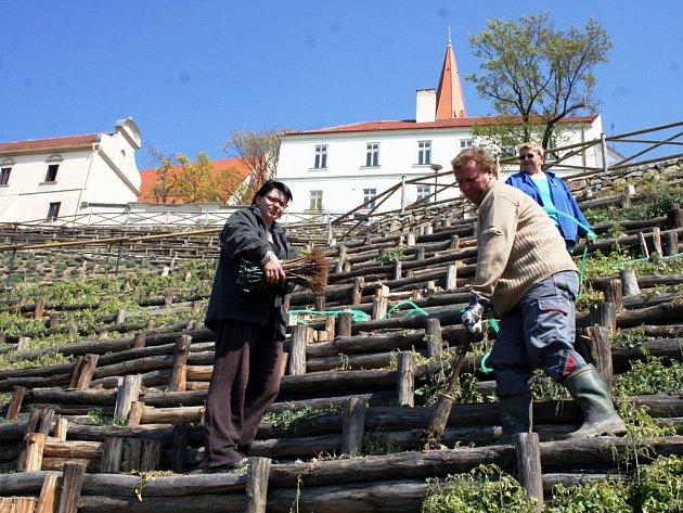 Zaměstnanci Vinařství Lahofer, které se o městskou vinici bude dvacet let starat, dosazují poslední sazenice z celkového počtu kolem tří tisíc hlav.