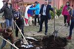Vzrostlou lípa srdčitou jako Strom republiky zasadili v sobotu v Popicích.