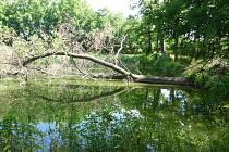 Zanesené retenční nádrže s poškozenou hrází u Břežan.
