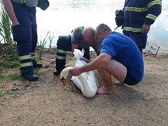 Hasiči zachraňovali labuť na přehradě v Horních Dunajovicích.