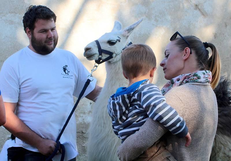 Osmé Burčákobraní mělo štěstí na počasí. Bavili se dospělí i malí. Třeba kouknutím na bílou lamu.