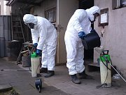 Specialisté firmy Pařez začali ve čtvrtek v Moravském Krumlově na Znojemsku dezinfikovat drobné domácí chovy drůbeže a ptactva, v nichž veterináři před dvěma měsíci utratili zvířata kvůli ptačí chřipce.